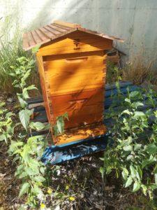 Les abeilles en plein travail !